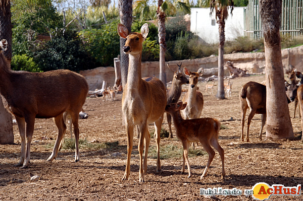 Foto de la noticia /public/fotos2/introduccion-barasingha-02112012.jpg