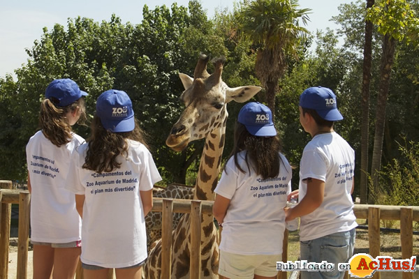 Foto de la noticia /public/fotos3/Campamentos-Verano-Zoo-Aquarium-de-Madrid-22062017.jpg